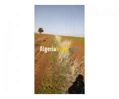 Location Terrain Agricole Ain temouchent Sidi ben adda