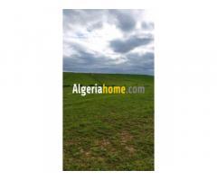 À vendre terrain agricole Annaba prix 200u le hectare