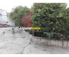 Vente Terrain Alger centre