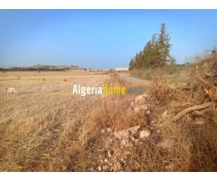 vente terrain chlef algerie