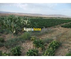 Vente ou location Terrain Agricole Batna