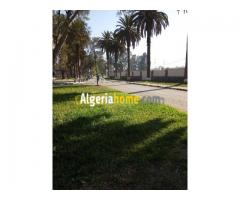 Location Terrain Alger