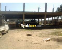 Location Terrain Alger